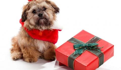 Iubitule, ce cadou mi-ai luat?